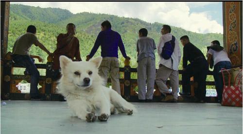 Hund in Bhutan - hat viel Zeit